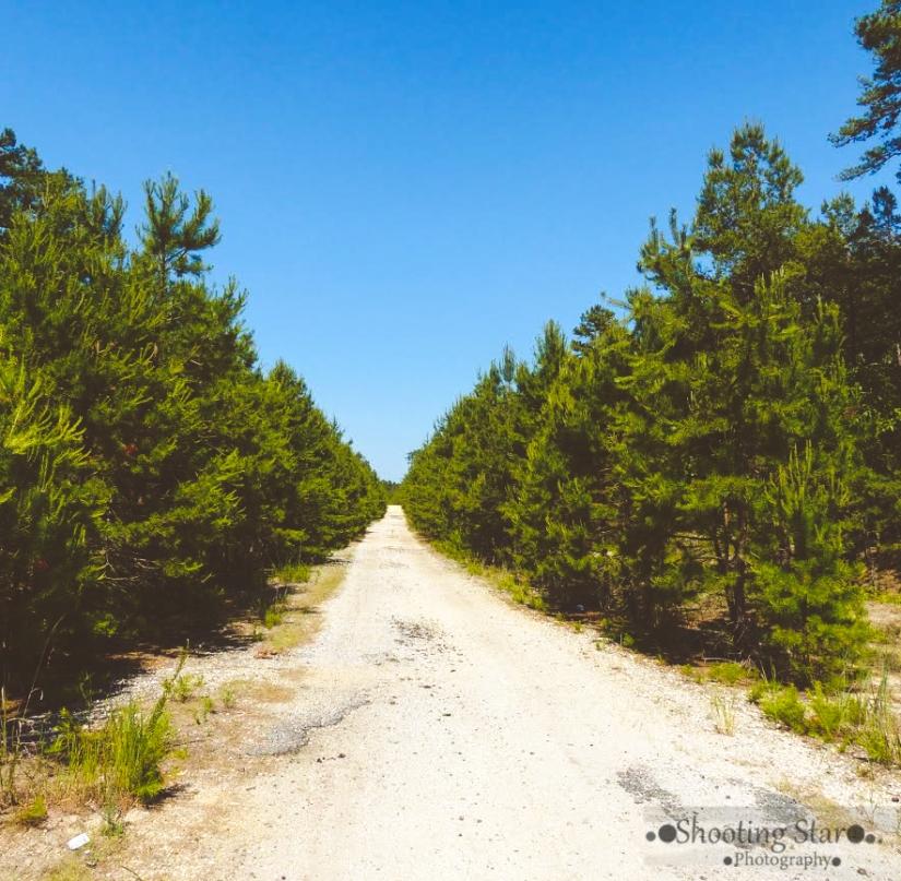 Mock Christmas tree farm-Edit