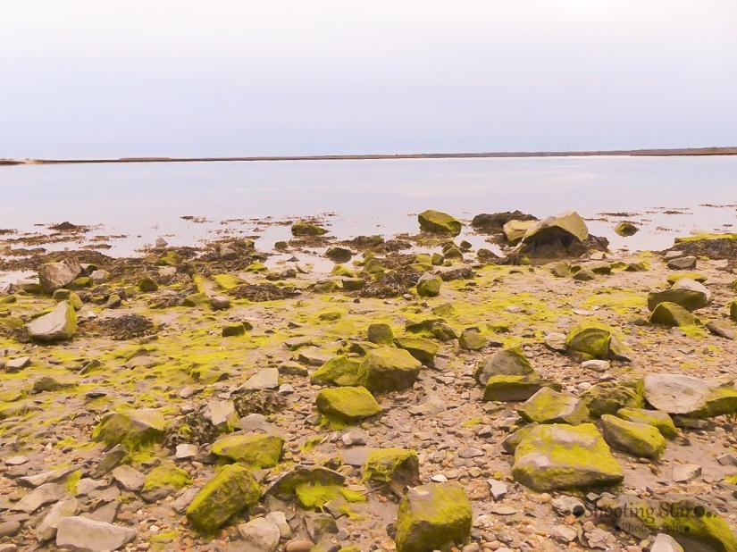 moss on private beach-Edit