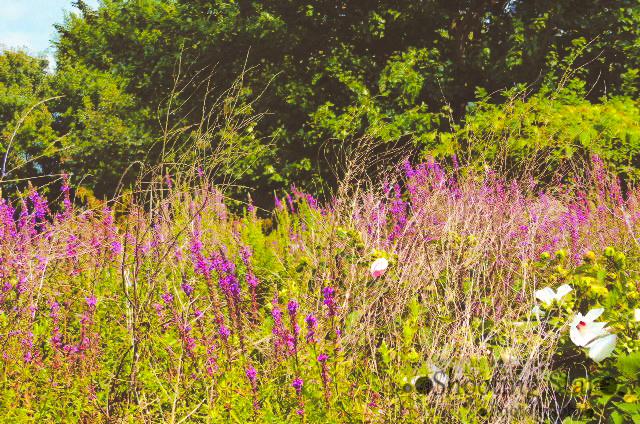 wildflowers-Edit