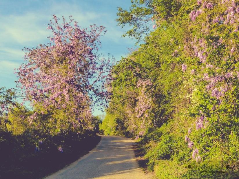 wildflowers everywhere-Edit