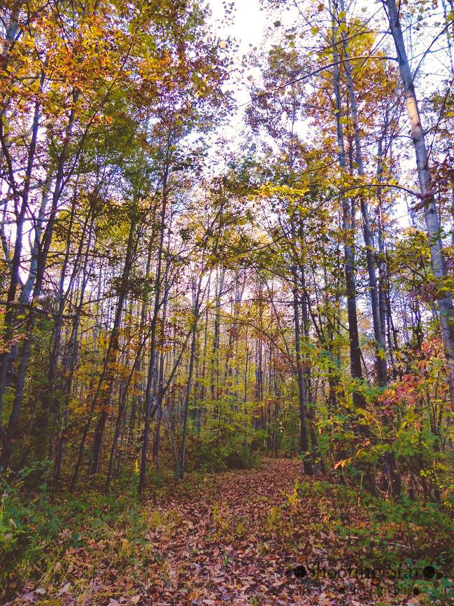 woods-Edit